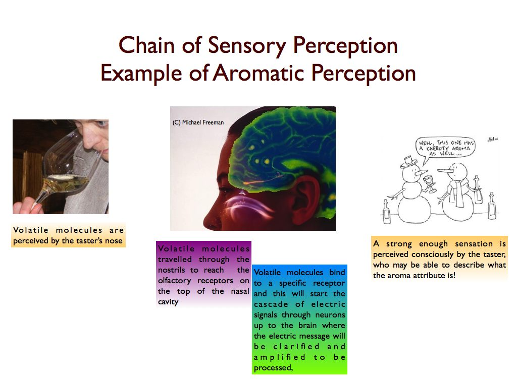 About Sensory Adaptation In Wine Tasting
