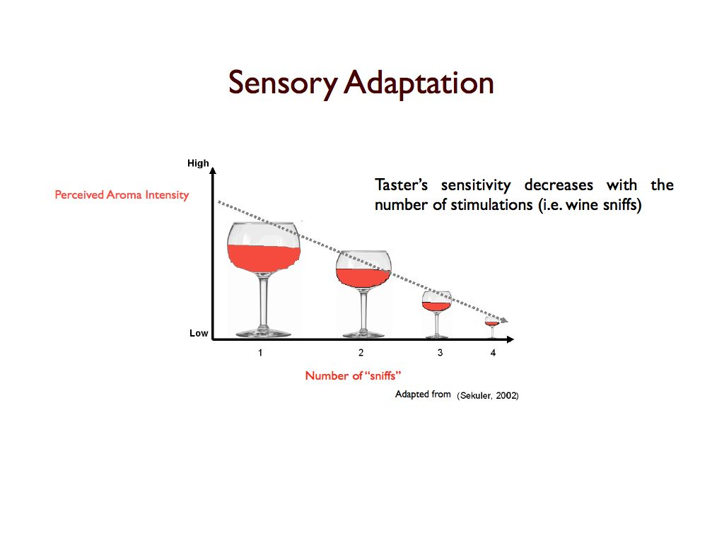 sensory adaption Read this essay on sensory adaption come browse our large digital warehouse of free sample essays get the knowledge you need in order to pass your classes and more.